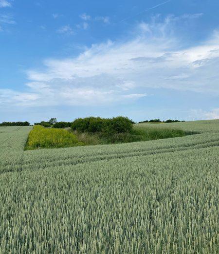 karsholm-jordbruk